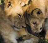 lion mum and daughter